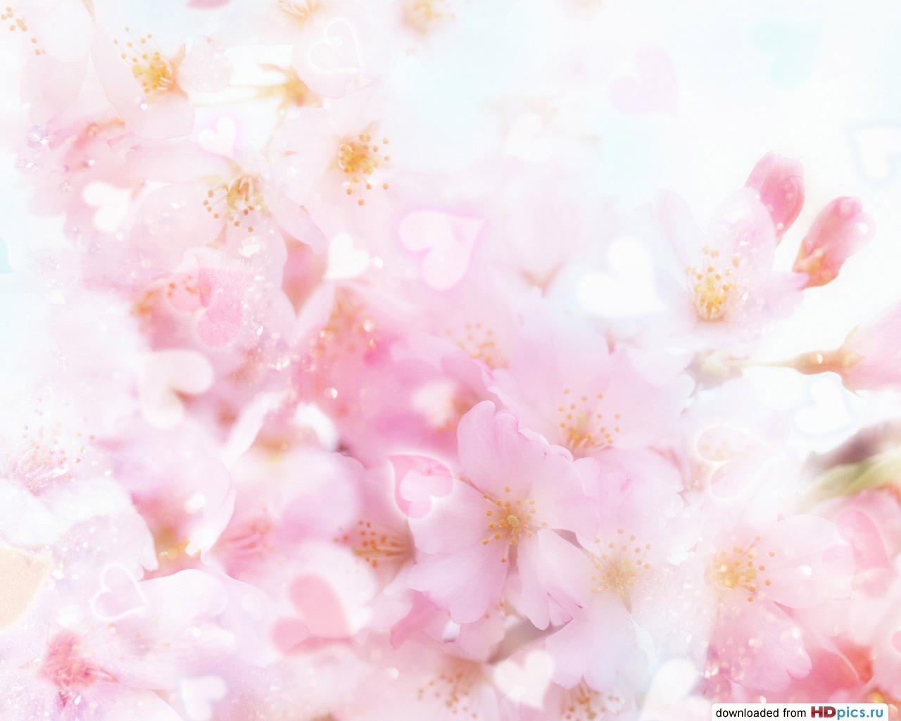 Цветы категория цветы тэги коллаж